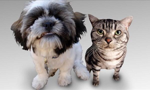 Pets_1455152252978.jpg