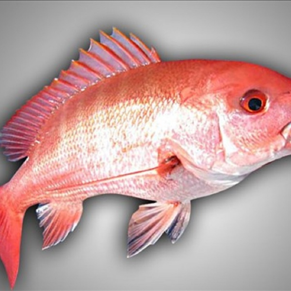 redsnapper_1496191622055.jpg
