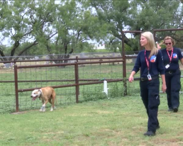 First Responders Save Canine_94304202