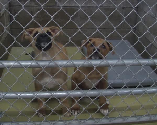 Abilene Animal Shelter foster program_37757451