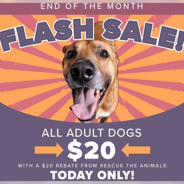 flash sale_1519838114394.png.jpg