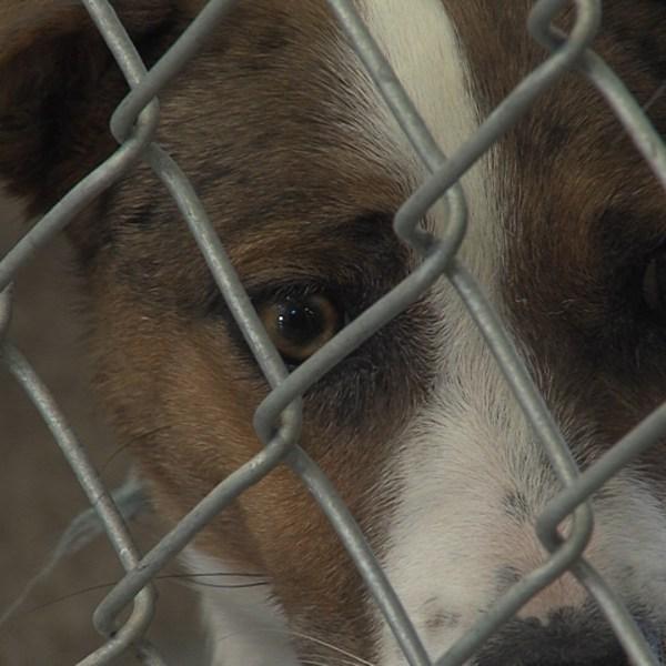 Abilene Animal Shelter