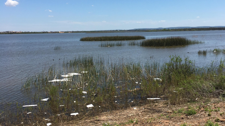 styrofoam at lake kirby(1)_1555107405456.jpg.jpg