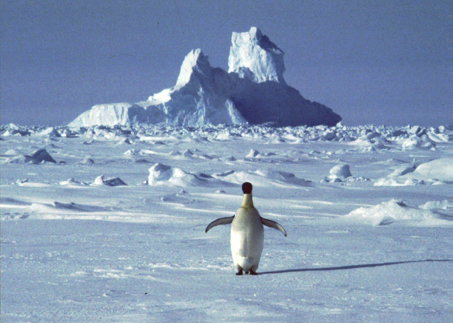 SINGLE PENGUIN ON ICE